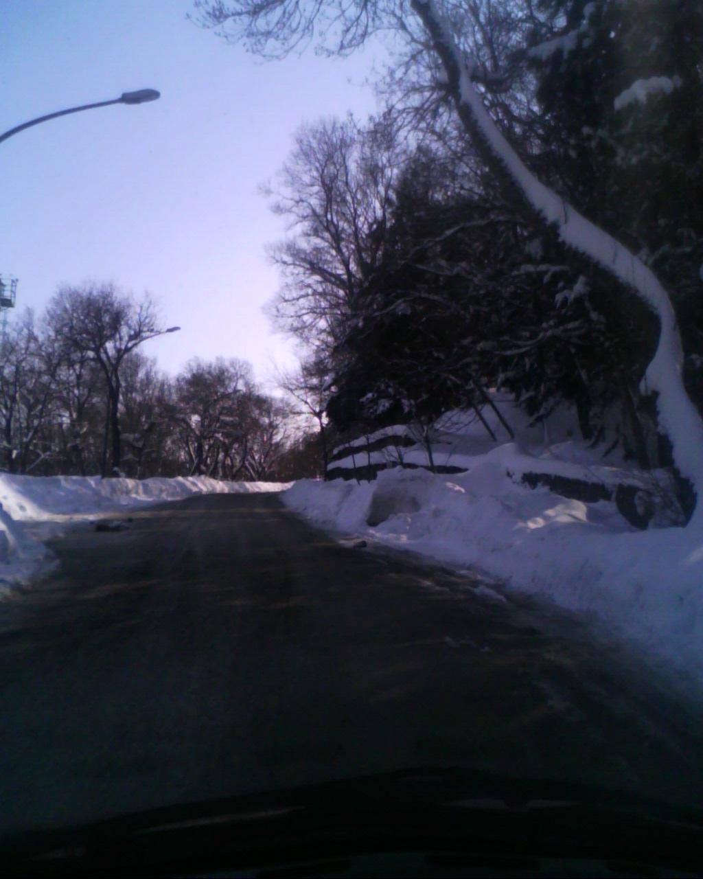 Roseto febbriaio 2012